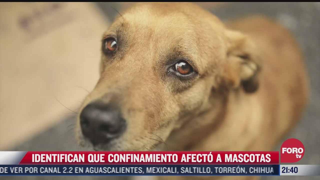 asi afecta el confinamiento por la pandemia a las mascotas