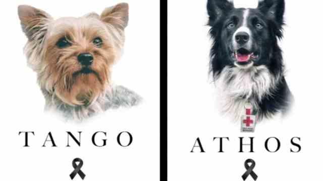Rinde homenaje a Athos y Tango, los perritos rescatistas envenenados con salchichas en Querétar