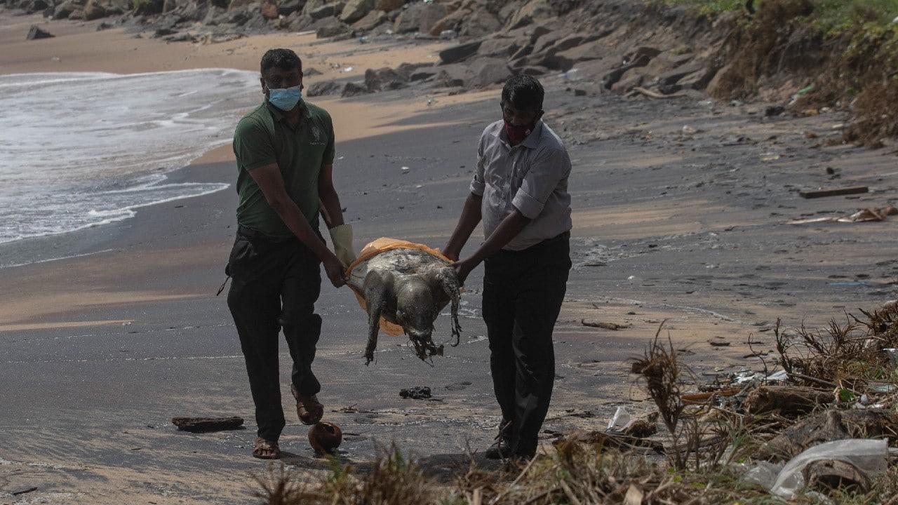Centenas de tortugas aparecen muertas en costas de Sri Lanka tras incendio de barco