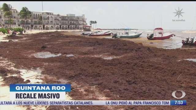 el sargazo afecta a la riviera maya en costas de quintana roo