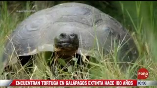 encuentran tortuga en galapagos extinta hace 100 anos