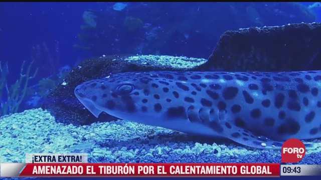 extra extra calentamiento global puede acabar con los tiburones