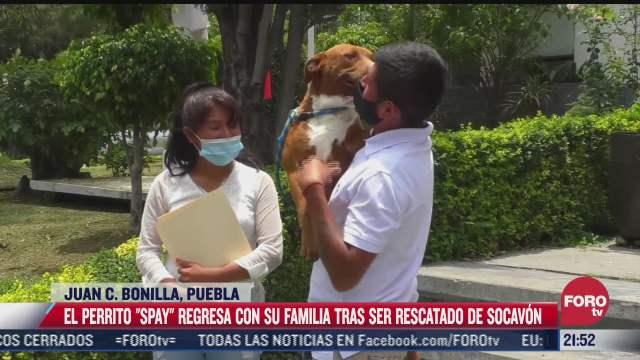 perrito spay regresa con su familia tras ser rescatado de socavon