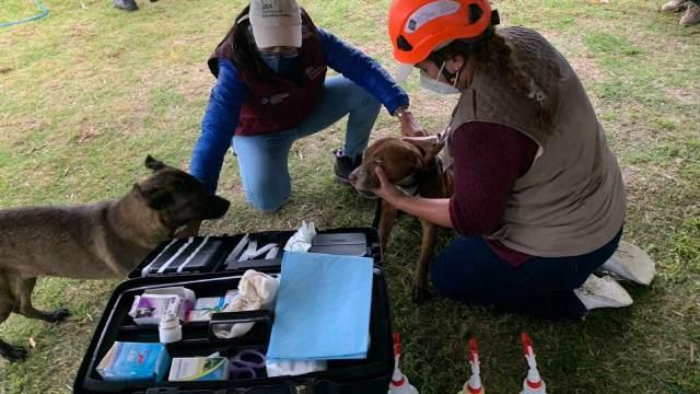 Perritos rescatados del socavón en Puebla se recuperan favorablemente, afirman rescatistas