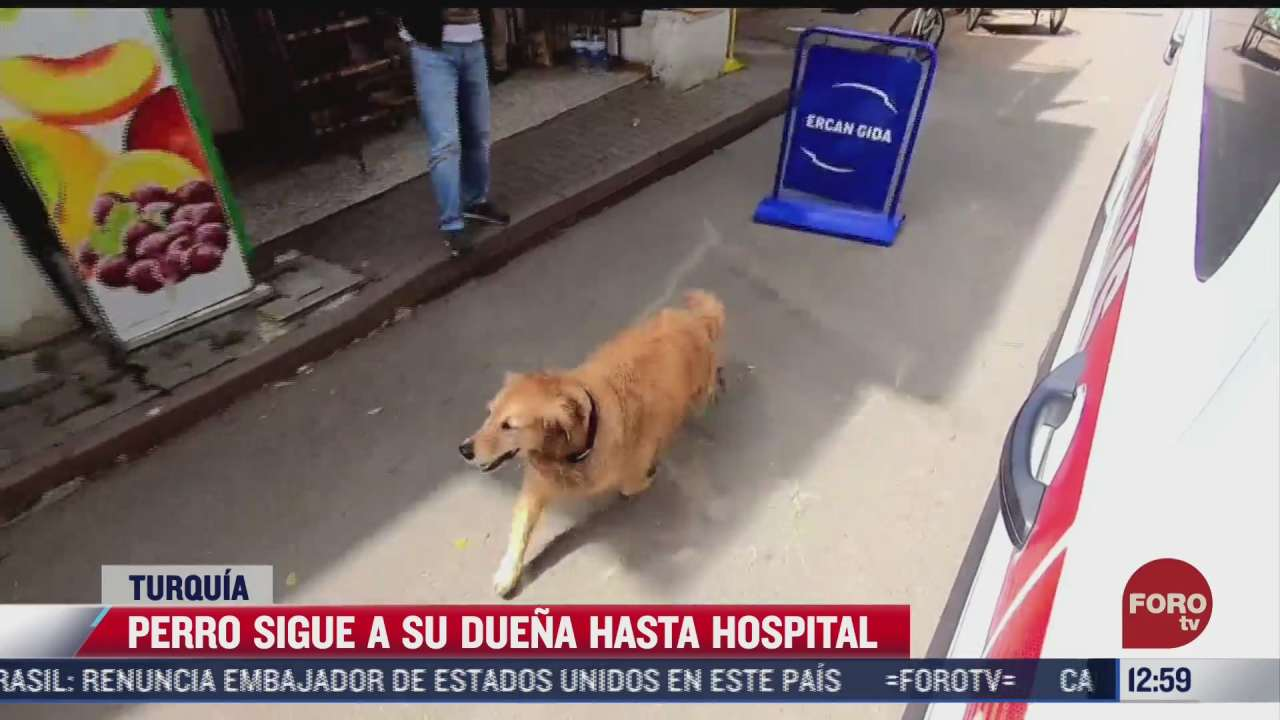 perro persigue ambulancia donde era trasladada su duena