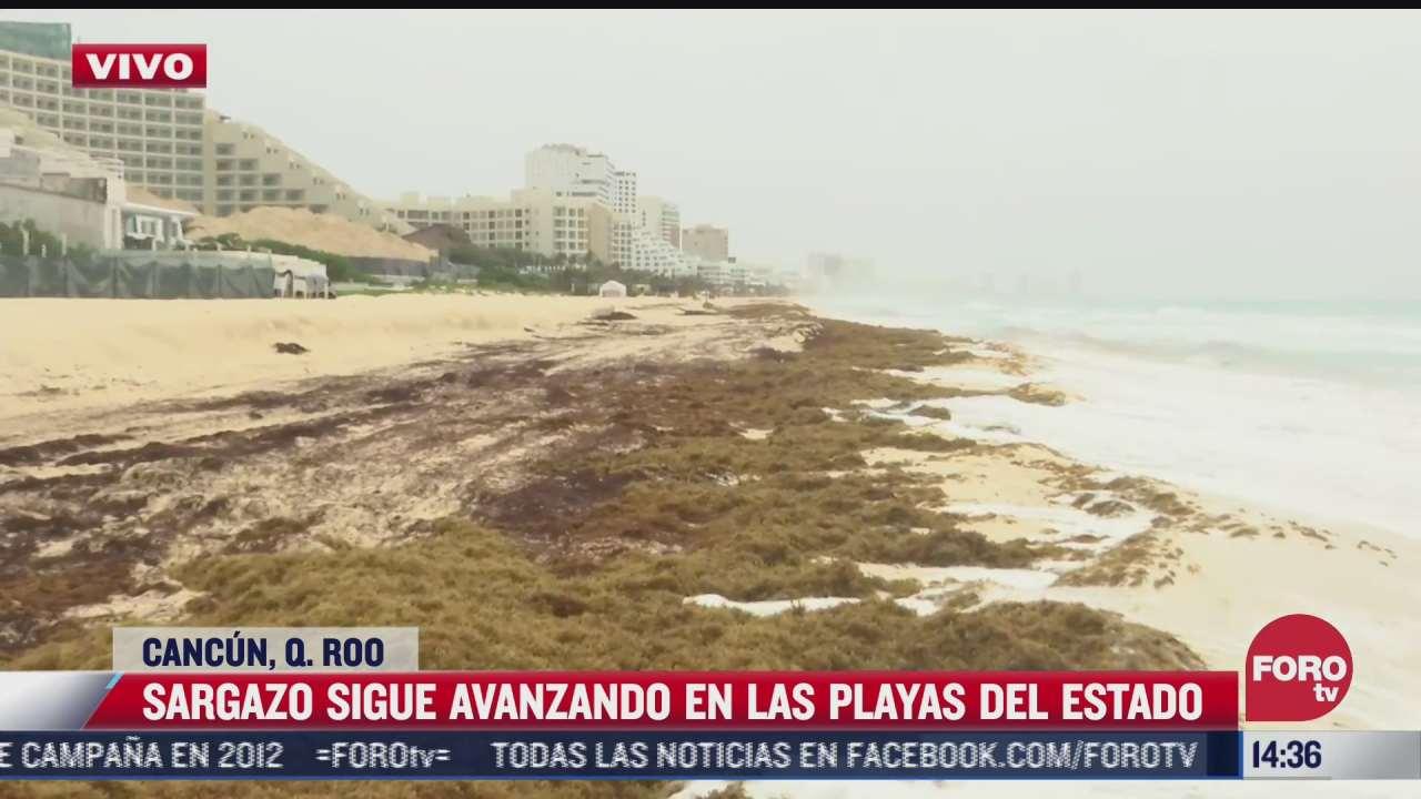 sargazo sigue avanzando en playas de quintana roo
