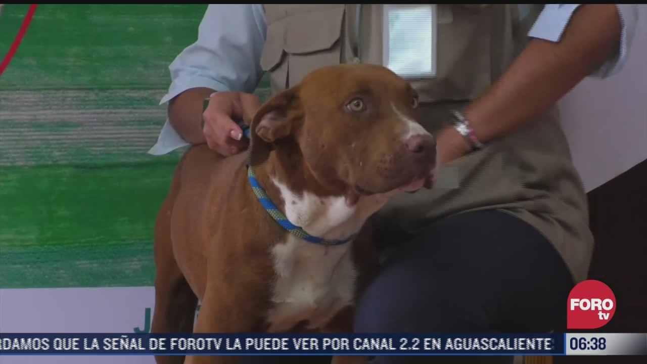 spay perro que cayo a socavon en zacatepec regresa con su familia