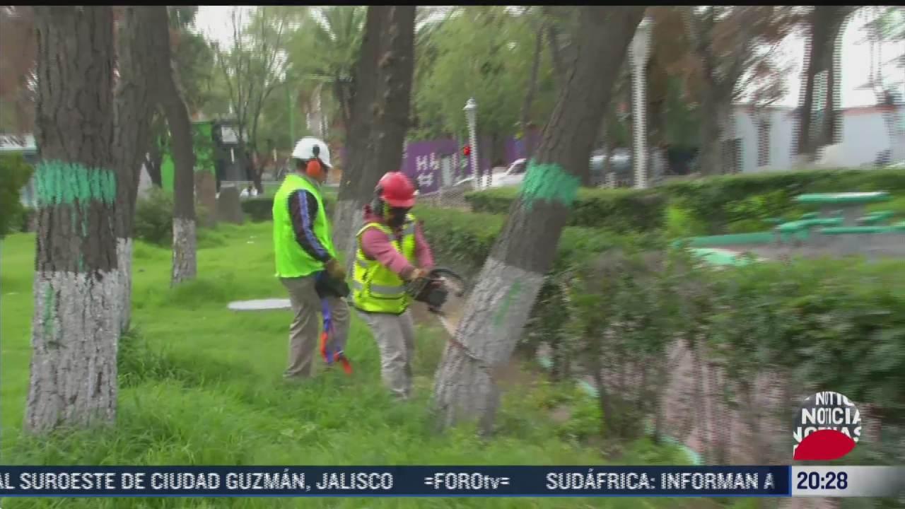 derriban casi 300 arboles afectados por plaga en pachuca hidalgo