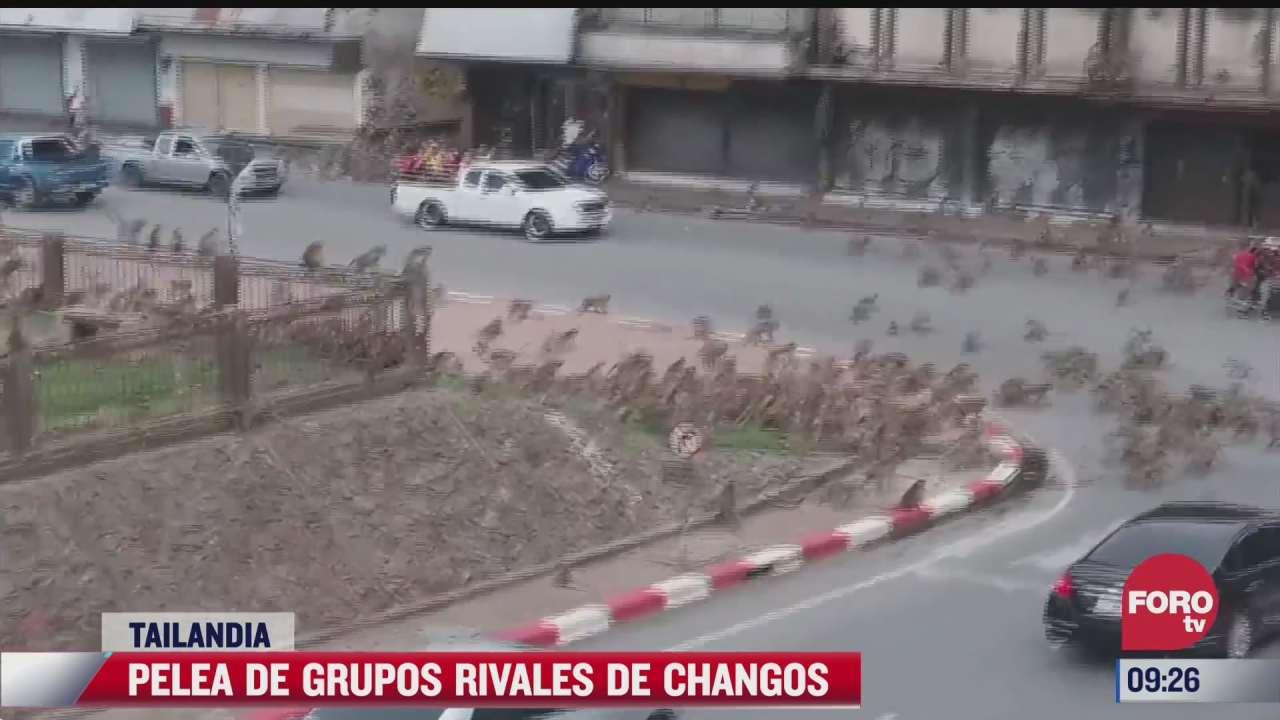 pelea de grupos rivales de changos