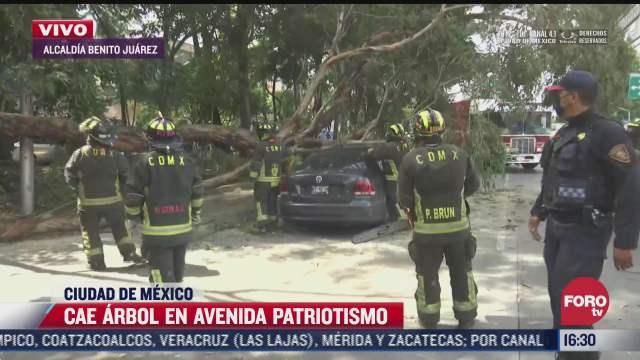 cae arbol sobre vehiculo en avenida patriotismo cdmx
