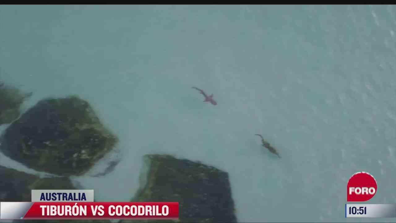 que pasaria si se encontraran un tiburon y un cocodrilo