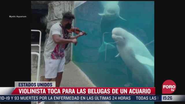 video violinista toca para las belugas de un acuario en eeuu