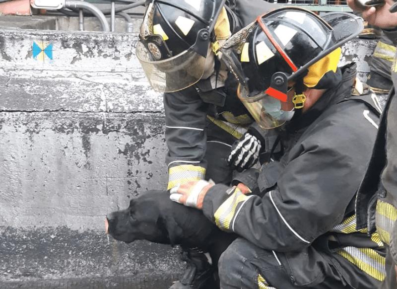 Bomberos con perro rescatado en CDMX