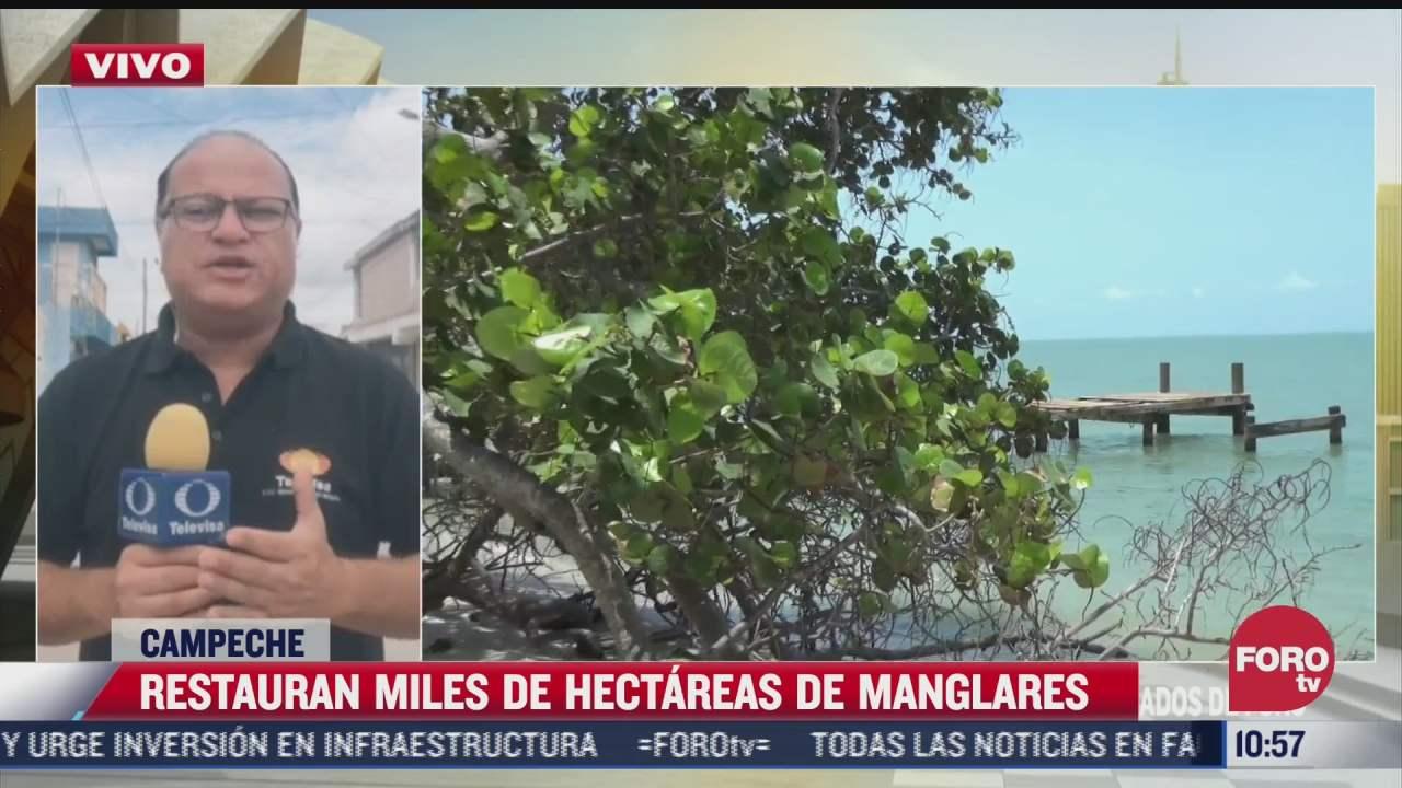 biologos restauran manglares en campeche