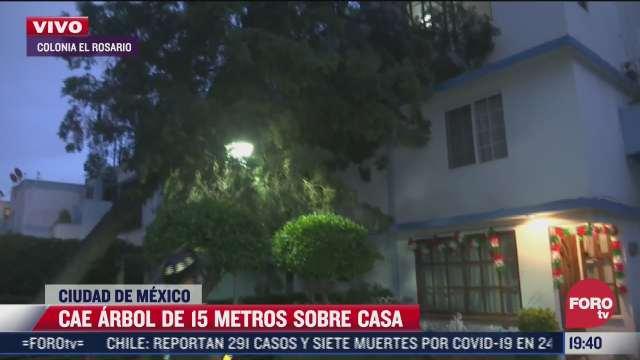 cae arbol de 15 metros de altura sobre casa en la colonia rosario