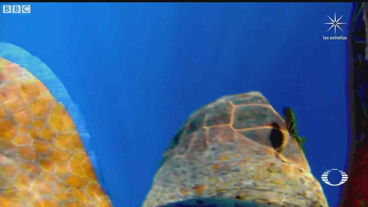 camarografo capta comportamiento y habitat de animales marino