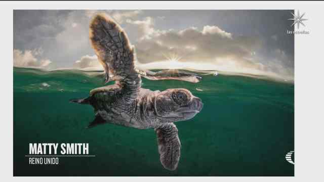 ganadores del concurso a mejor fotografo del oceano del ano