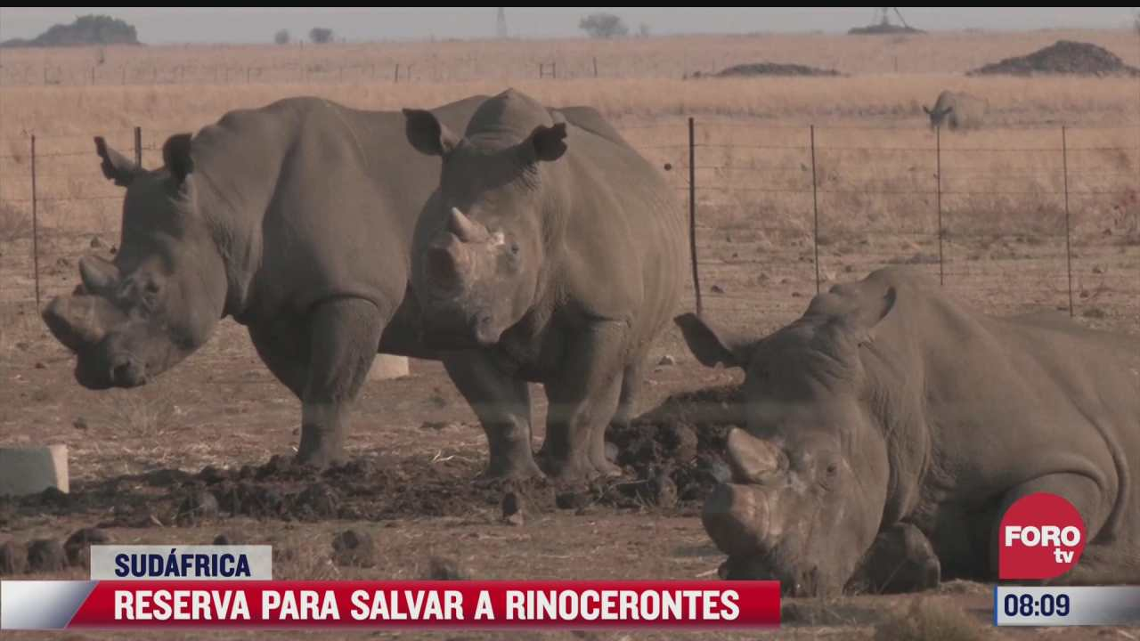 hombre crea reserva de rinocerontes en sudafrica
