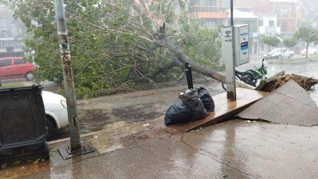 Tormenta y fuertes vientos derriban árboles en Palenque, Chiapas