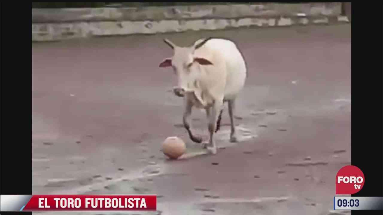 toro cubre el balon como buen futbolista