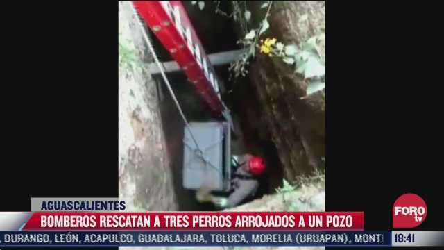 bomberos rescatan a perros abandonados en pozo de aguascalientes