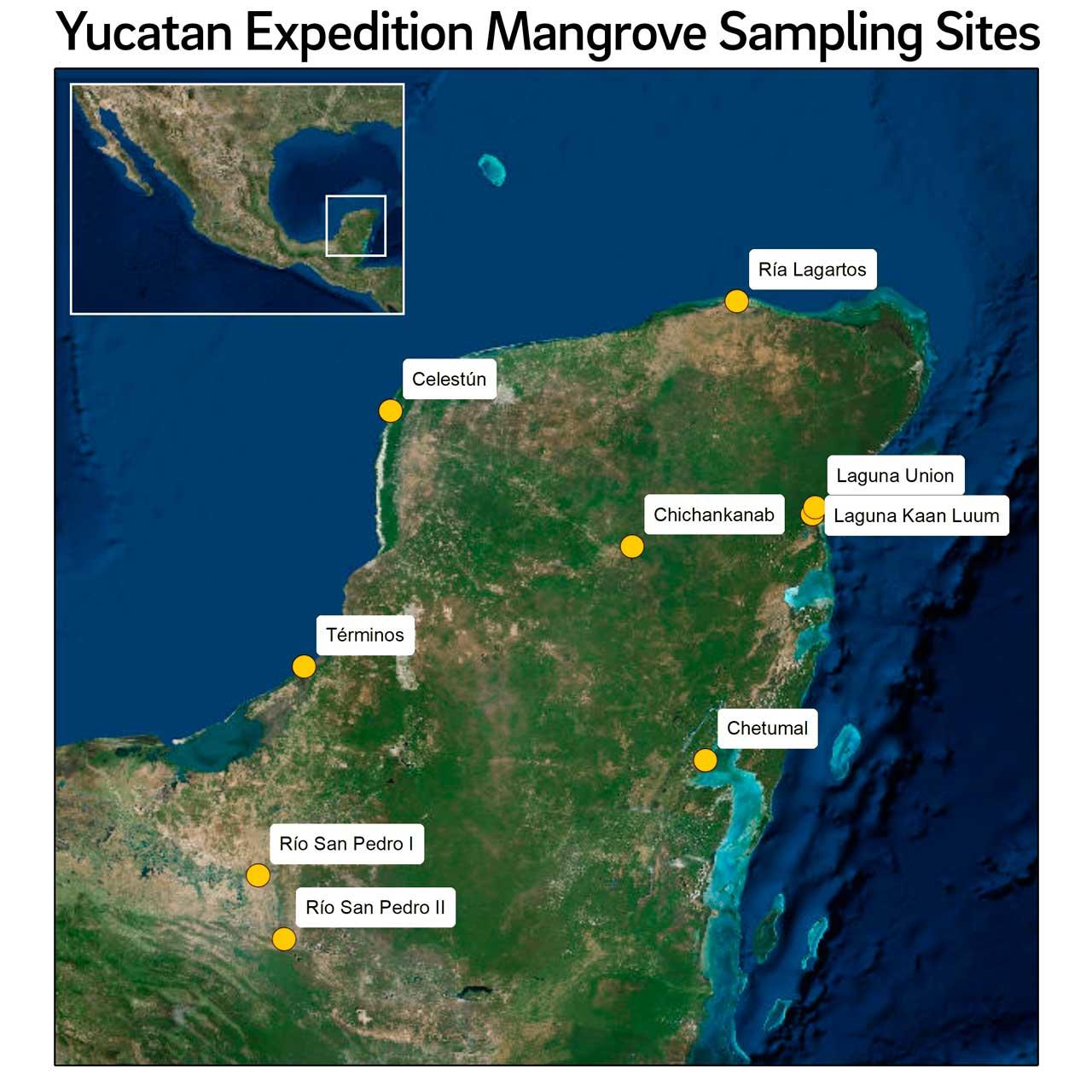Ubicación del bosque de manglares en la Península de Yucatán