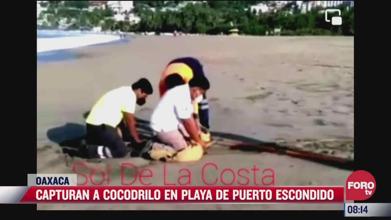 Capturan a cocodrilo en playa de Puerto Escondido, Oaxaca