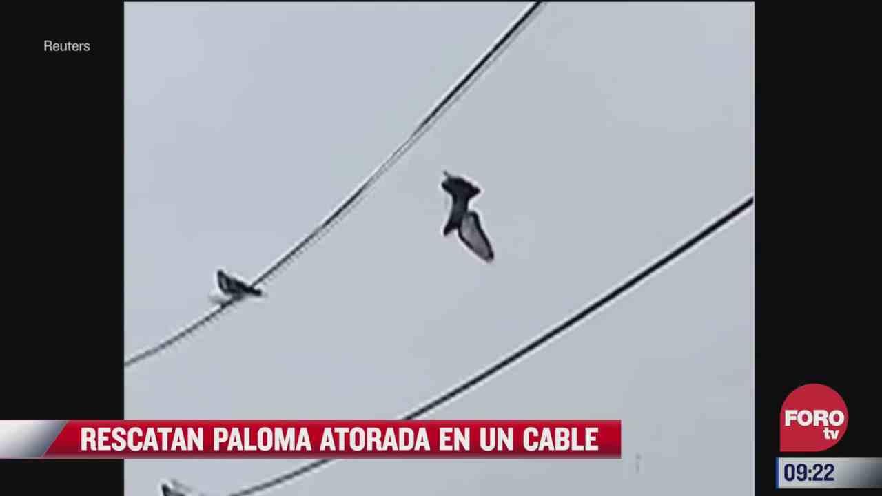 dron ayuda a liberar a paloma atrapada en cables de alta tension