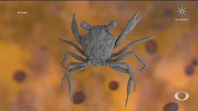 encuentran fosil de cangrejo que vivio con los dinosaurios