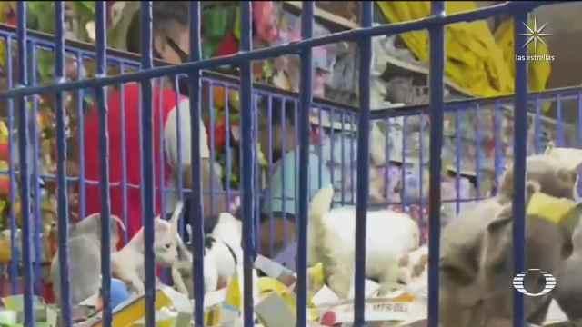 la venta ilegal de animales en el mercado de sonora