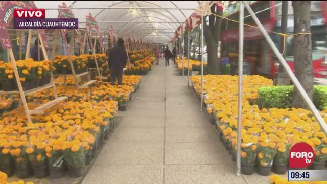 venta de flores de cempasuchil sobre paseo de la reforma