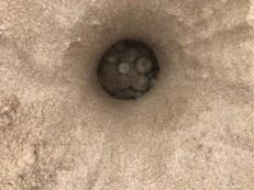 ous tortuga boba