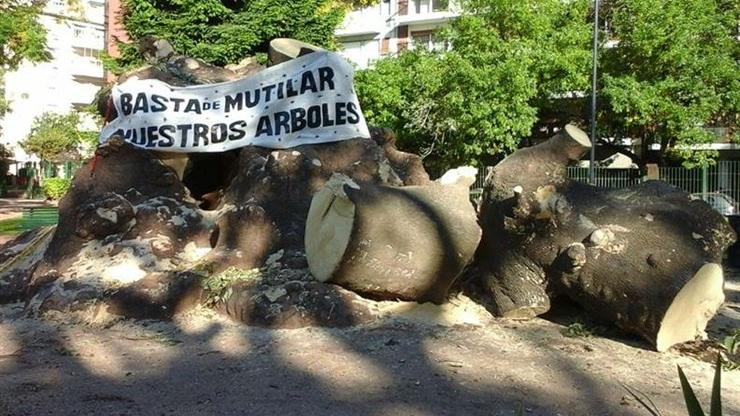 Photo of Fue talado el ombú centenario de Parque Rivadavia