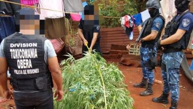 Photo of Misiones: Detienen a una jubilada de 74 años por cultivar una planta de marihuana que utilizaba con fines medicinales.