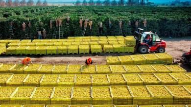 Photo of Por primera vez en la historia Argentina exporta limones a China
