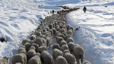 """Photo of Las nevadas en la Patagonia llevan a la """"desaparición productiva"""" del campo"""