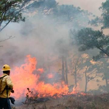 Cuatro incendios forestales han impactado en la zona Costa