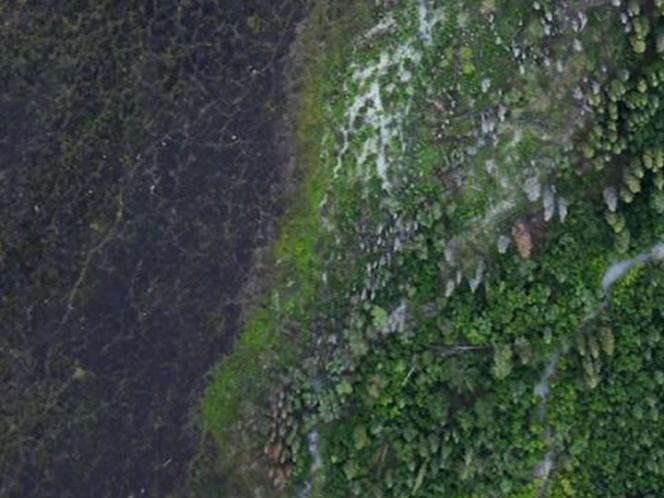 Google Earth revela 467 millones de hectáreas de bosque sin registrar