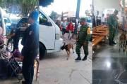 Inspeccionan equipajes y unidades en terminales de Comitán