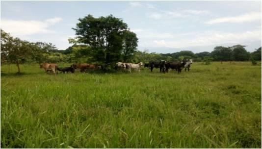 Disminuye un 60% robo de ganado en Chiapas
