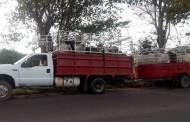 SSyPC recupera 15 semovientes en el municipio de Reforma