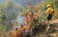 Se Impulsa La Prevención De Incendios Forestales Con Quemas Prescritas en Áreas Naturales Protegidas