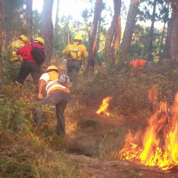 Se atienden cuatro incendios activos en Chiapas, mediante coordinación interinstitucional