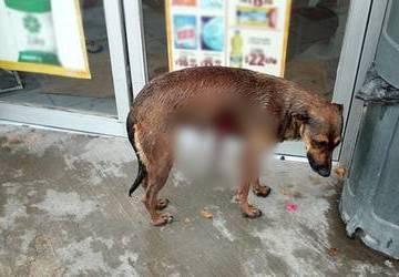 Alistan iniciativa para multar y sancionar judicialmente a las personas que maltraten a animales domésticos y en situación de calle