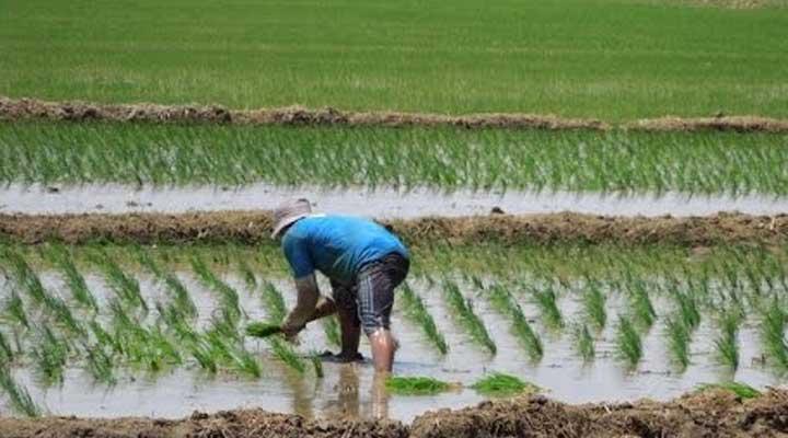 Los productores fueron detenidos por desviar la cosecha.