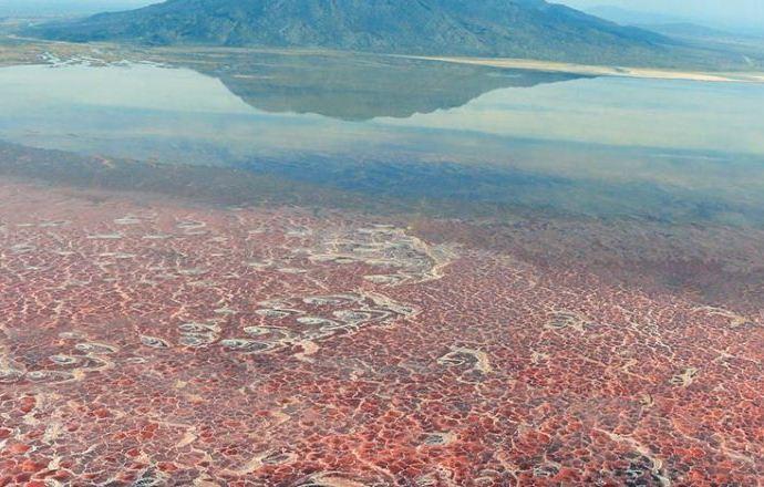 Lago Natrón, impresionan al mundo