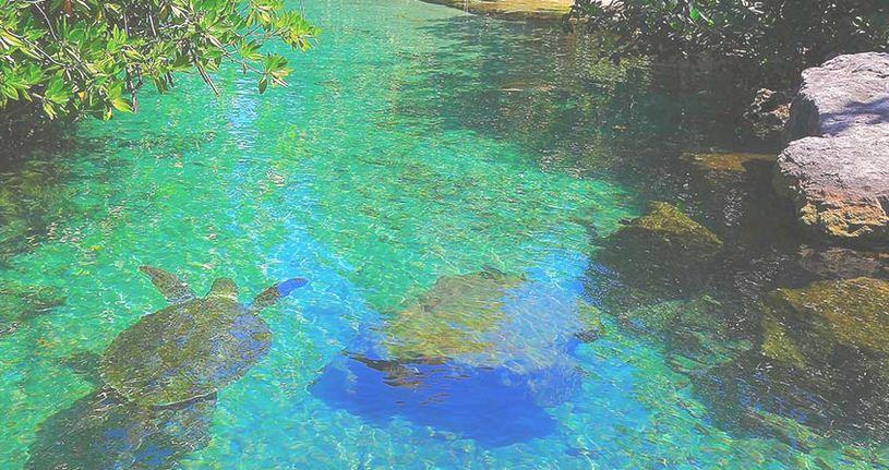 La Naturaleza en el fastuoso Parque Xcaret
