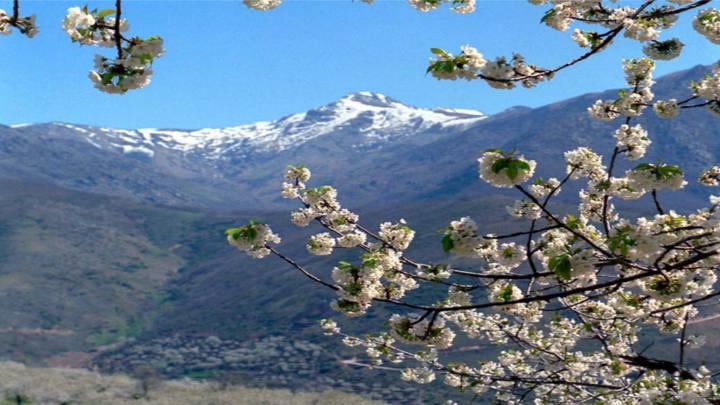 Espectáculo exquisito de flores y aromas