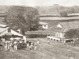 Nicaragua Sugar Estates Limited