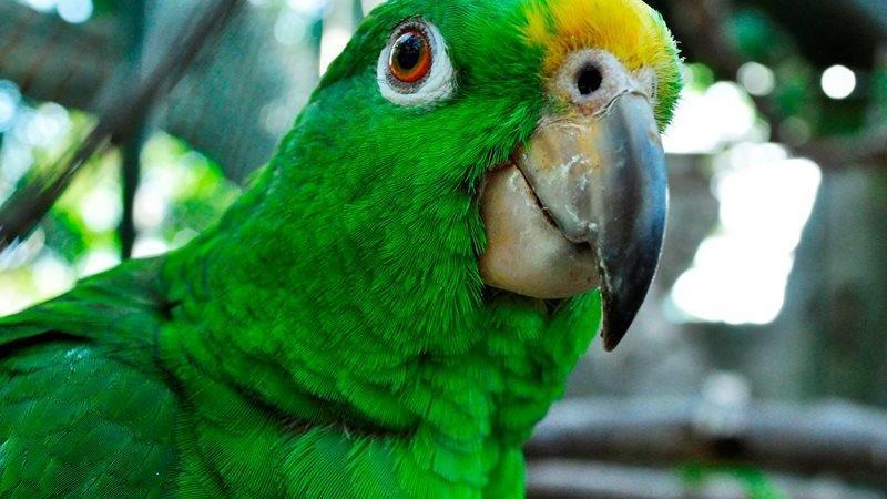 Zoológico de Barranquilla, estará cerrado en Navidad y Año Nuevo
